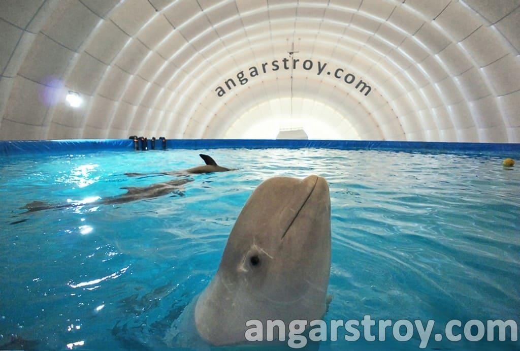 Мобильный ангар-дельфинарий